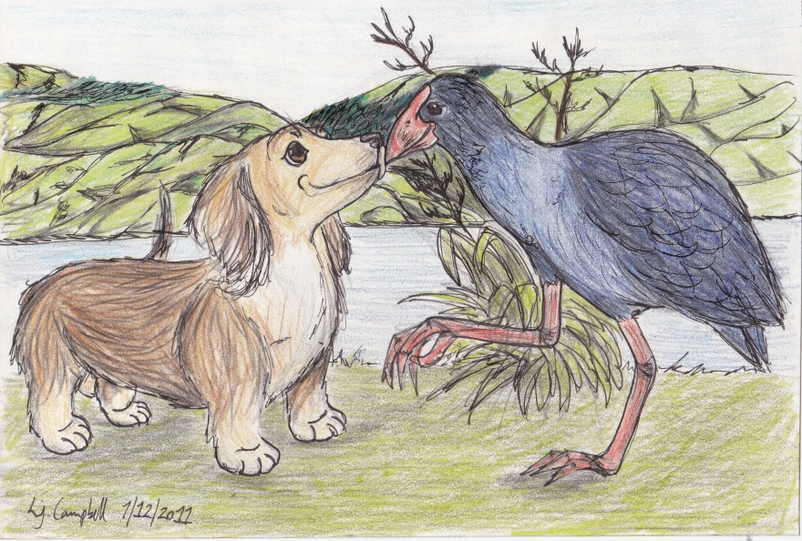 August - Daxi and the PukekoColoured Pencil